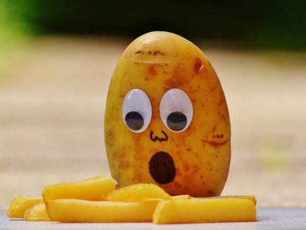 Potato is king of food