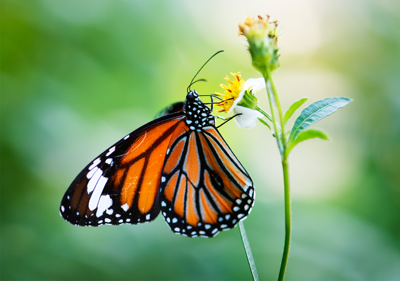 Butterfly is looking for best flower